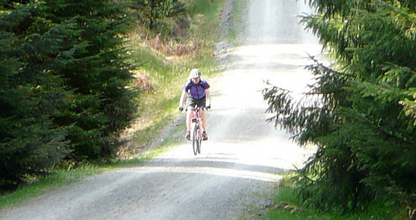 Cycling in Grizedale Forest